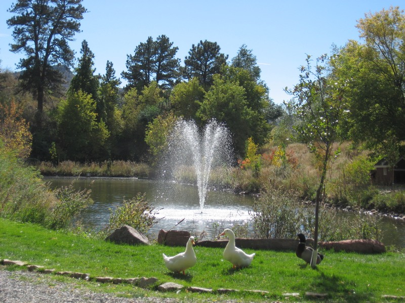 Pond Fountain Swimming Pool Builders Materials